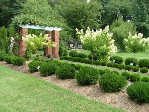 10 best small evergreen shrubs flowering and foliage for No maintenance flowering shrubs