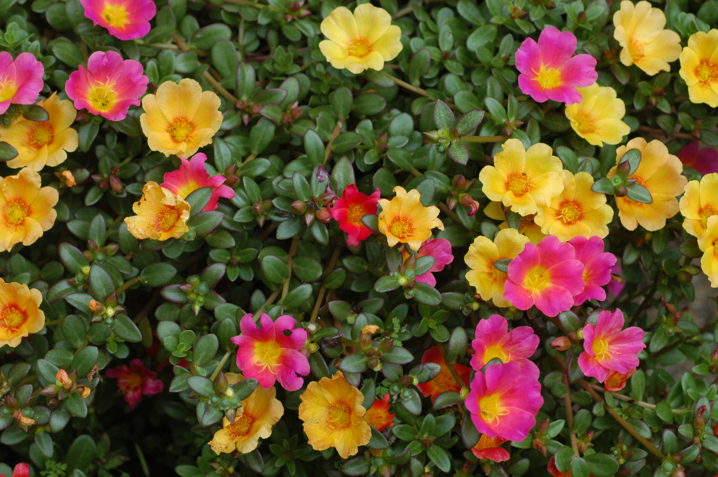 10 most beautiful flowers to grow in hanging basket Plants that love sun and heat