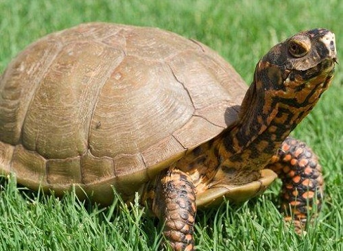 Turtles as Pets For Kids of Good Pets For Kids