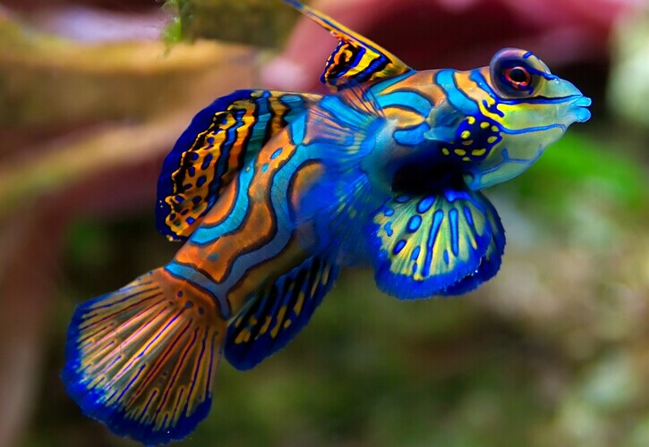 14 most attractive saltwater fish in the sea wow amazing for Saltwater fish food