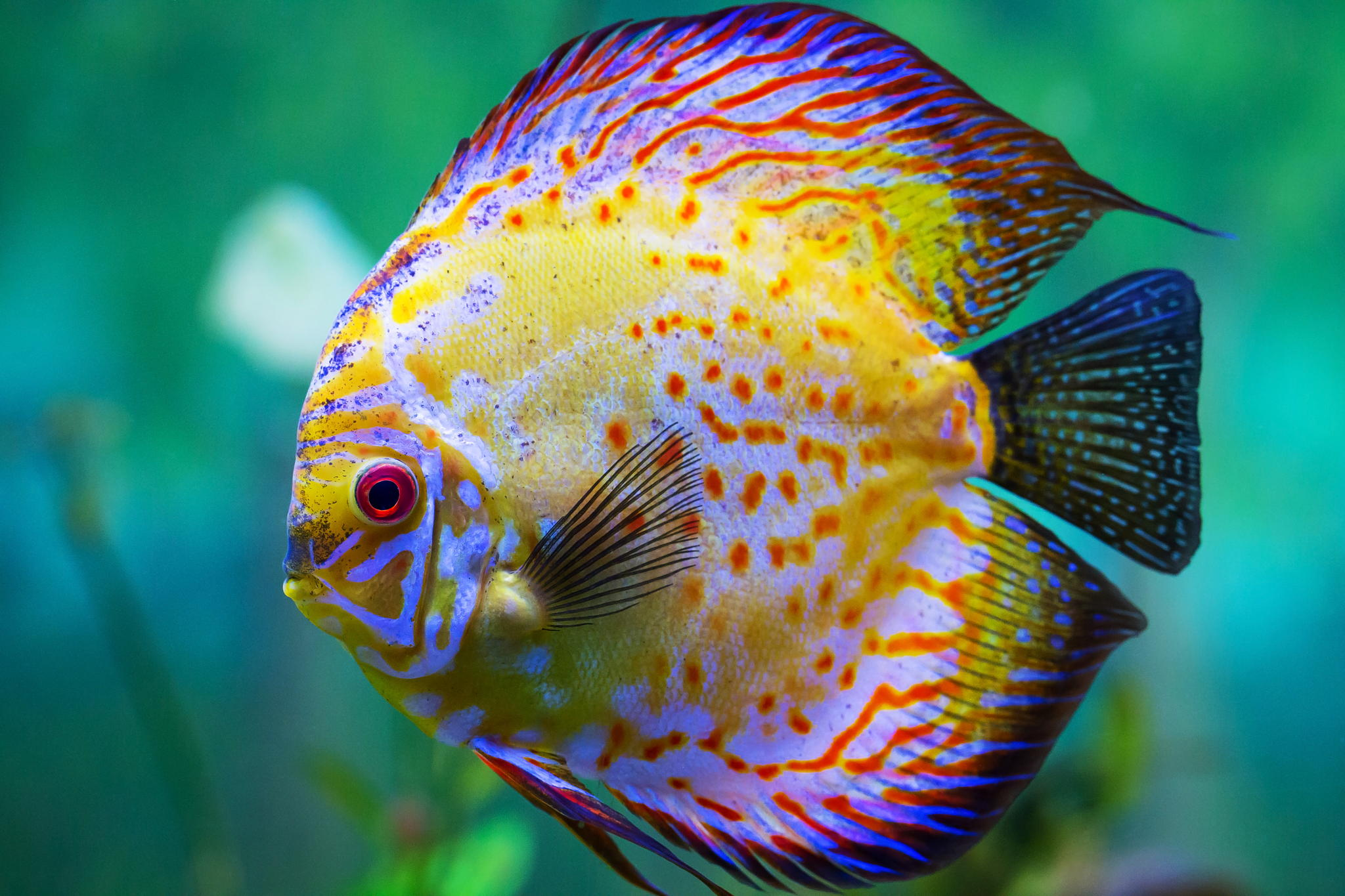 Top 12 Most Beautiful Fish In The World Enkivillage