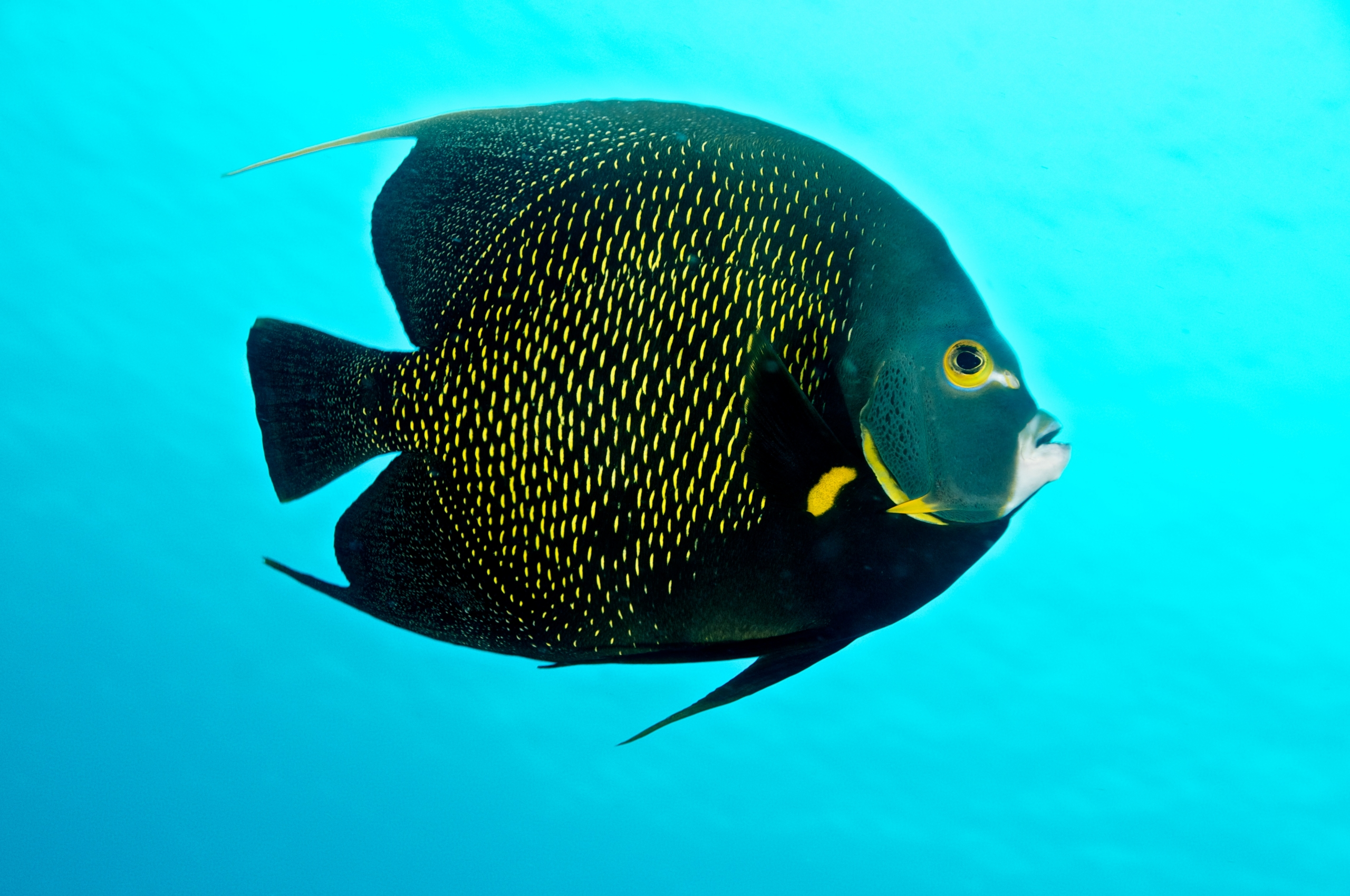 Top 12 most beautiful fish in the world enkivillage for Best fish in the world