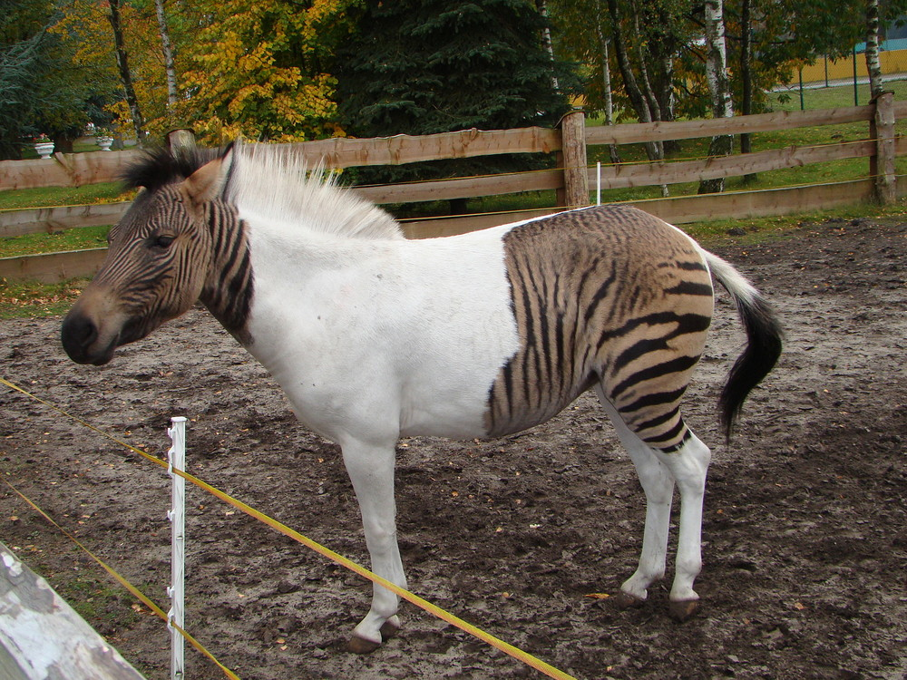 8 Hybrid Animals You Might Not Know Enkivillage