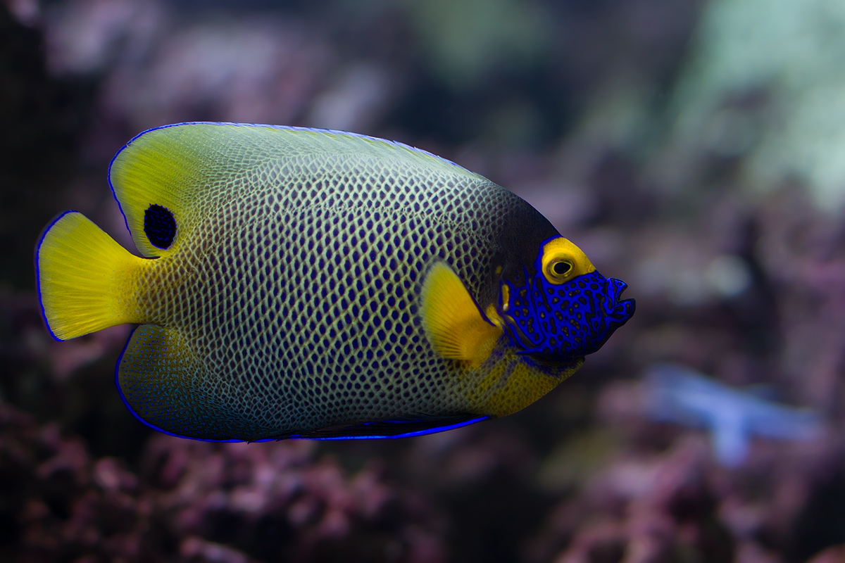 14 Most Attractive Saltwater Fish In The Sea Wow Amazing