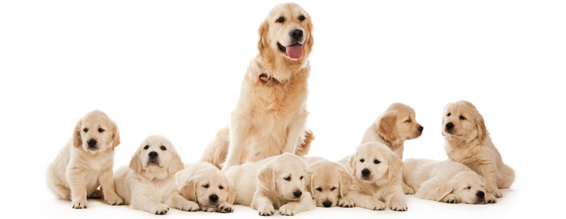 how long are dogs pregnant dog s pregnancy by week